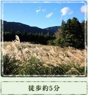 すすき草原 / 徒歩約5分