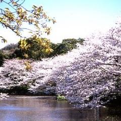 【早割60】春の懐石料理を満喫♪ゆったり鎌倉ステイ(夕朝食付)
