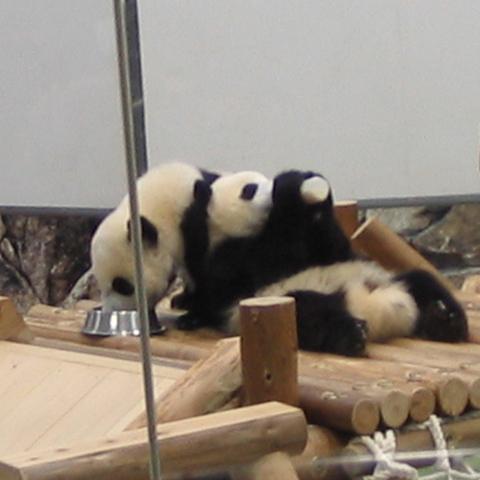 「1泊朝食付」☆アドベンチャーワールド入場券付☆ジャイアントパンダに会いに行こう♪《最安値》
