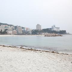 ペットと泊まる 白浜温泉 ベイリリィ国民宿舎しらゆり荘