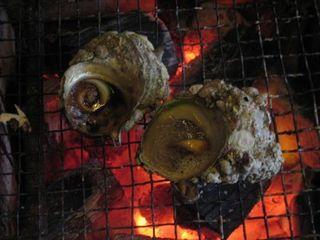 炉端焼き+アワビ付きコ-ス