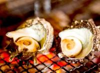 【楽天限定】伊豆を楽しもう! 創作ディナーコース&目の前の磯で獲れたサザエのつぼ焼きをサービス!