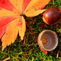 〜秋季限定〜【-秋の松茸&九州産牛三昧- 個室食】味よし♪薫よし♪旨みをとじこめた、秋の味覚