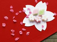 春爛漫!桜舞い踊る♪ 郡上のお花見スポットを巡る 季節の味覚プラン★+゜【現金特価】