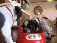 愛犬と一緒に泊まるペンションZOO <淡路島>