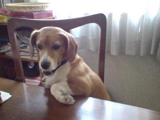★愛犬も一緒のお部屋でご宿泊いただけます♪「プラスわんプラン」素泊まり★ワンちゃん特製カードも作成