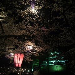 【日本三大夜桜】四千本の桜♪日本三大夜桜見学へでかけよう!★特典付き★