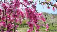 巡るたび、出会う旅。東北【ふくしま春旅】春うらら♪お弁当を持ってお花見へ♪桜弁当付きプラン*1泊2食