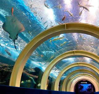 毎日開催イルカショー!浅虫水族館パック宿泊プラン