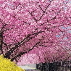 【2月〜4月限定】河津桜&桜まつりを堪能♪ 2大特典付き♪