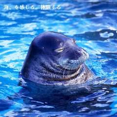 【最寄No.1☆】8歳以下添い寝無料!水族館うみたまごチケット付プラン