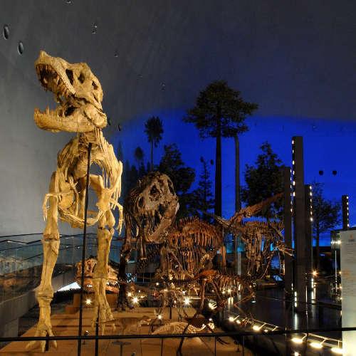【お車で約10分!】福井県立恐竜博物館常設展 入館券付きプラン≪1泊朝食≫