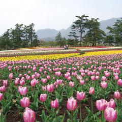 ◆花の香りに癒される♪くじゅう花公園入場チケット付プラン
