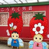 【イチゴ狩り&お土産付♪】三重県オリジナル品種「かおり野」が45分間食べ放題!