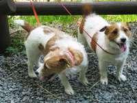 【毎月11日・22日はワンワン、ニャンニャンの日】愛犬&愛猫と同伴宿泊限定!大幅値引きで御優待中!