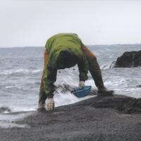 狼煙漁港で水揚げ!旬の魚貝類を豪快に味わう《海藻しゃぶしゃぶ》