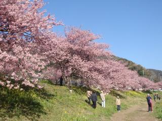 源泉掛流しの温泉を貸切♪伊豆の桜祭り満喫プラン