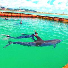 【イルカと遊ぼう!イルカと泳ごう!】ドルフィンファンタジー体験☆朝食バイキング付