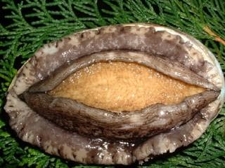 アワビ刺身とアワビの焼きにアワビ粥も付く贅沢プラン