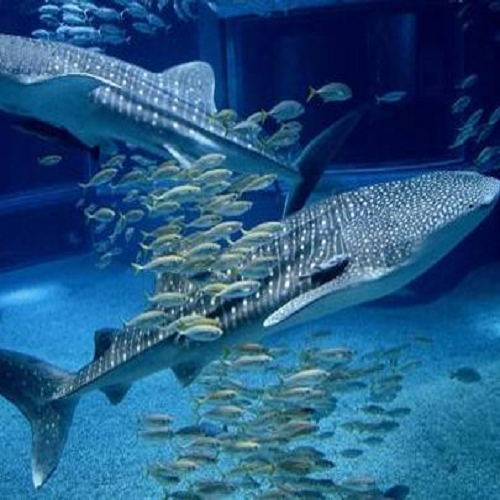 【Trusty x Aquarium】海遊館チケット付:アウト12時