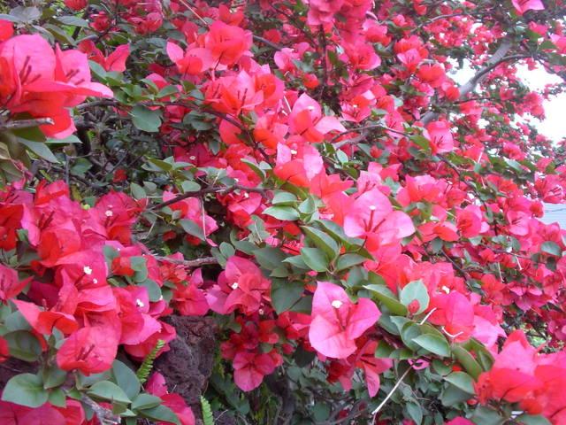 Атами - Izukogen Onsen J Garden