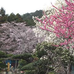 【春旅応援】4月中旬は桜吹雪★グレードアップ会席が1000円オフ♪[1泊2食付]