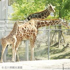 本館【人気のいしかわ動物園チケットが全員に付いてお得】〜ファミリープラン〜