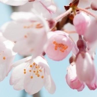 秋田天然温泉 ルートイングランティア秋田SPA RESORT 関連画像 13枚目 楽天トラベル提供