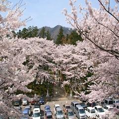 【現金特価】新潟一の桜を見に行こう!駐車場無料で快適なお花見旅プラン〜フレンチディナー☆