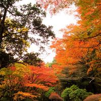 「強羅で寛ぐ休日」…季節の庭園と旬の会席料理を愉しむ