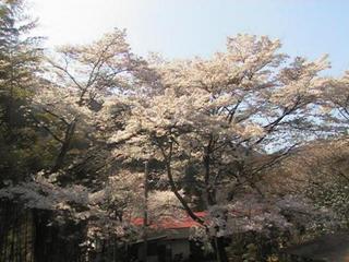 【春得】吉野山★桜満喫!静かな宿でゆるりゆったり桜満喫プラン