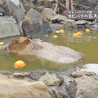 【カップルorご夫婦限定特典付】伊豆高原で過ごす2人の休日★貸切温泉無料&お風呂は24時間OK