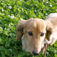 【1日1室限定】U^ェ^U<愛犬と一緒に泊まれるペットプラン♪