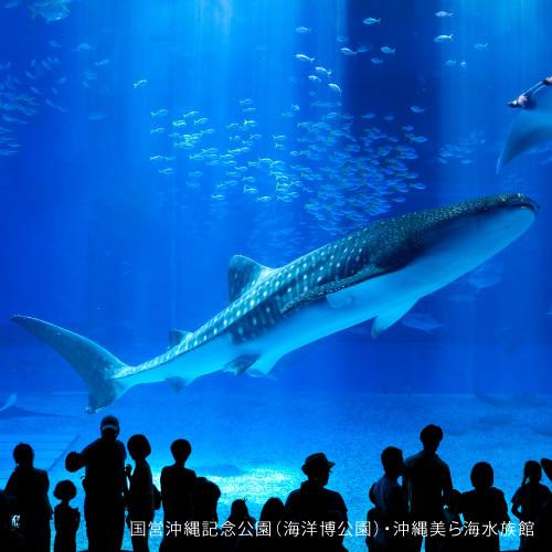 【家族同室】一度は行ってみて♪沖縄美ら海水族館チケット付☆彡(朝食付き)