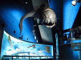 環境水族館アクアマリンふくしま入場券付&嬉しい海鮮料理2食付プラン