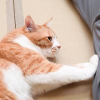 【ニャンコタイム:90分】◆ご好評につき◆猫まみれ&ふぐコースを愉しむ≪3/31まで≫