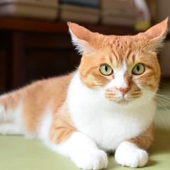 【にゃんこタイム最大4.5時間!/21時30分まで】猫好き必見!2がつく日はにゃんこの日!/2食付
