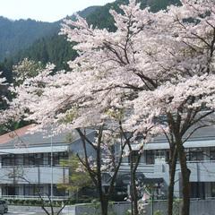 【*お花見*】桜に囲まれた当館でお花見を♪≪二食付≫