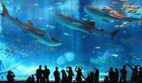 【家族の記念旅】3連泊以上で美ら海水族館チケット&ご夕食1回付き〜Suite Stay〜<朝食付>