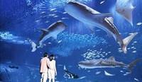 【家族の記念旅】3連泊以上で滞在中美ら海水族館チケット1枚・夕食1回プレゼント!