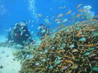 【家族同室】海の中ってすごいね!親子で楽しめる体験ダイビング付1泊2食付プラン