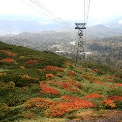 【日本一早い紅葉】鮮やかな赤黄の絨毯を歩く…紅葉の大雪山へ出かけよう!
