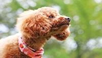 【夏休み】愛犬と泊まれるグランピングペットヴィラ★1日2棟限定