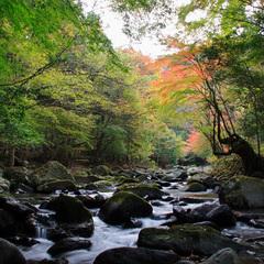 【1泊夕食付】朝はゆっくり、夕食には季節の伊豆天城名物料理を満喫プラン♪