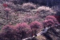 上州牛プレート焼をメインとした彩り豊かな春の旬味をお楽しみください!!『春の清流プラン』