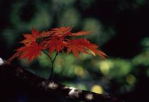 【9〜11月限定】ログハウスでスタンダード1泊朝食付き(秋の洋食)プラン