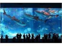 ♪美ら海水族館入場券付き♪青い海と鮮やかな魚に癒されよう☆(朝食付)
