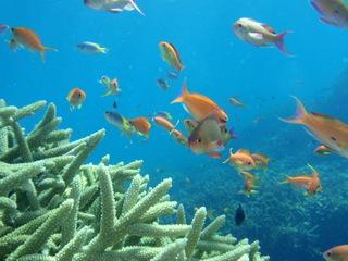 熱帯魚に会いに海へGO!シュノーケルセットレンタル&朝食サービスプラン