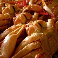 【冬】《活蟹専門宿》「憧れの活松葉ガニが食べたい!」地元で揚がった極上松葉かにフルコース★タグ付き♪