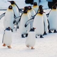 ●一番人気●冬季オープン現金特価 旭山動物園チケット付+無料送迎しますカップルファミリー大満足プラン